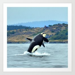 Orca Breach Art Print
