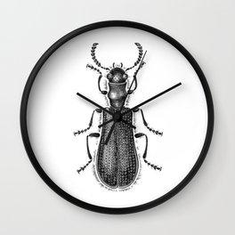 Beetle 04 Wall Clock