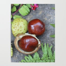 Conkers -horse chestnuts Poster