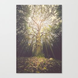 The taller we are Canvas Print