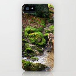 Hidden Spring in Winter iPhone Case