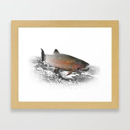 Migrating Steelhead Trout Framed Art Print
