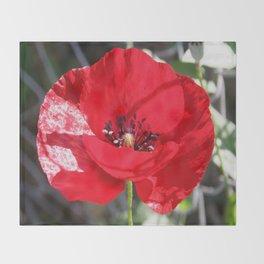 Single Red Poppy Flower  Throw Blanket