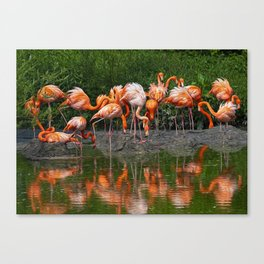Flamingo Reflection Canvas Print