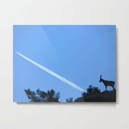 The mountain goat looks at the plane Metal Print