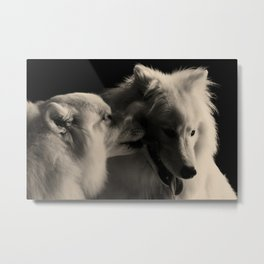 Samoyed Love Metal Print