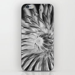 Dandelion iPhone Skin