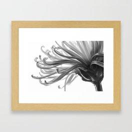 Spider Mum Black and White 2 Framed Art Print