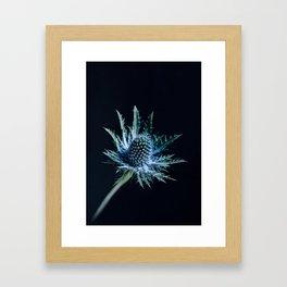 Blue Thistle Framed Art Print