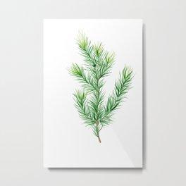 Pine Branch Metal Print