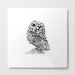 The Northern Saw-whet Owl Metal Print