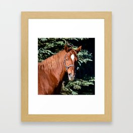 Miss Sadie - A horse, of course Framed Art Print