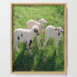 Three Cute Spring Lambs Serving Tray