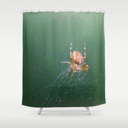 European garden spider (Araneus diadematus) Shower Curtain