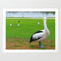 Pelican and seagulls Art Print