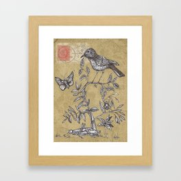 Vintage Birds and Bugs Framed Art Print