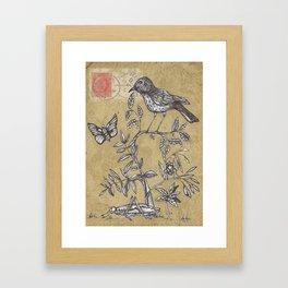 Vintage Birds and Bugs Framed Art Print