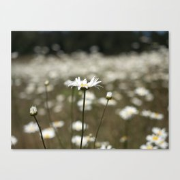 Wildflowers in an Oregon Field Canvas Print