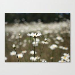 Wildflowers in an Oregon Field Canvas Print