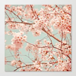 blossoms all over Canvas Print