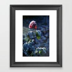 Frosted Rose Framed Art Print