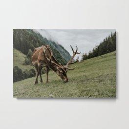 Austrian Deer with Antlers in the mountains of Austria | Wildlife Wall Print |  Metal Print