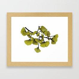 Gingko Green Framed Art Print