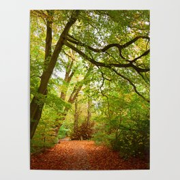 Path in the forest Nature Poster