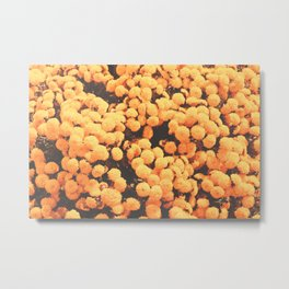 Yellow Chrysanthemum Autumn Flowers Photography Metal Print