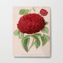 Rose Victor Trouillard Vintage Botanical Floral Flower Plant Scientific Metal Print
