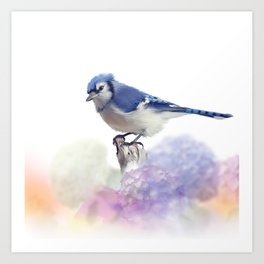 Blue jay in Flower garden,watercolor painting on white background Art Print