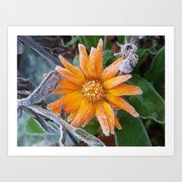 frosty flower Art Print