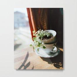 Vintage Succulent Print Metal Print