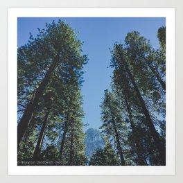 Forest Peak Art Print