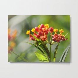 Little Spring Blooms Metal Print