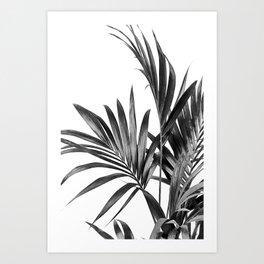 Palm Leaves Black and White 01 Art Print