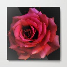 RED ROSE - 10318/1 Metal Print