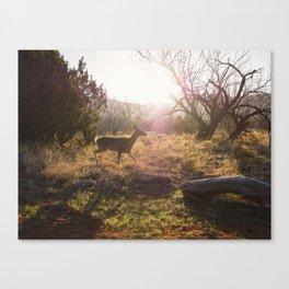 Doe in the morning sun. Palo Duro Canyon, Texas. Canvas Print