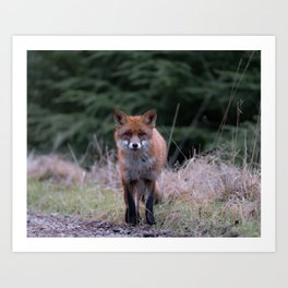 The cute fox Art Print