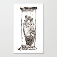 Frogmouth Canvas Print