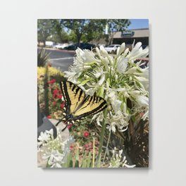 Admiration: Butterfly Metal Print