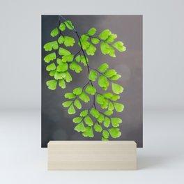 Maidenhair Fern on Gray Mini Art Print