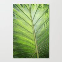 palm Canvas Prints featuring Palm by ALLY COXON