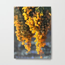Golden Grapes in the Setting Sun Metal Print