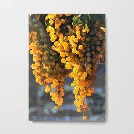 Golden Grapes in the Setting Sun Metal Print