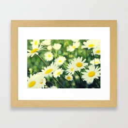 Chamomile flowers Framed Art Print