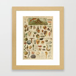 Vintage sealife and seashell illustration Framed Art Print