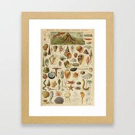 Vintage sealife and seashell illustration Framed Art Print