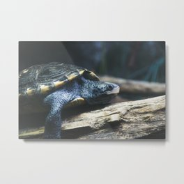 Testudo the Turtle Metal Print