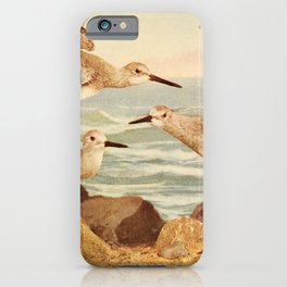 Vintage Print - Birds and Nature (1900) - Western Willet iPhone Case